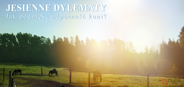 Jak podnieść odporność konia jesienią?